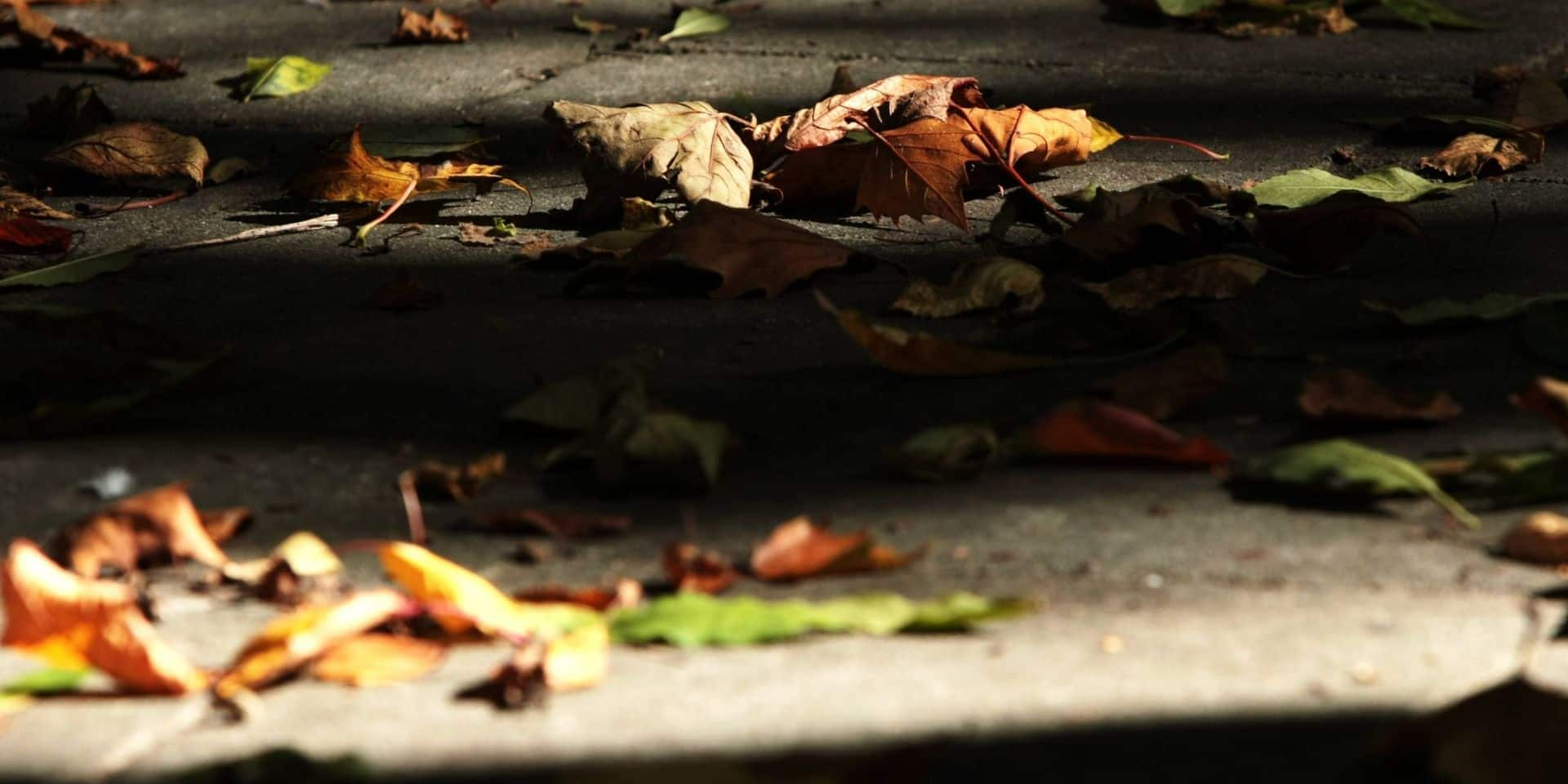L'automne arrive à peine, mais les feuilles tombent déjà