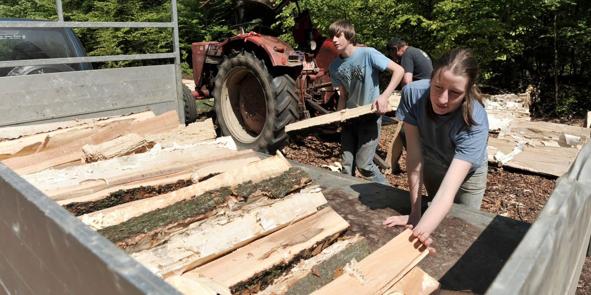 Replanter la forêt wallonne pour la régénérer, mais pas n'importe comment