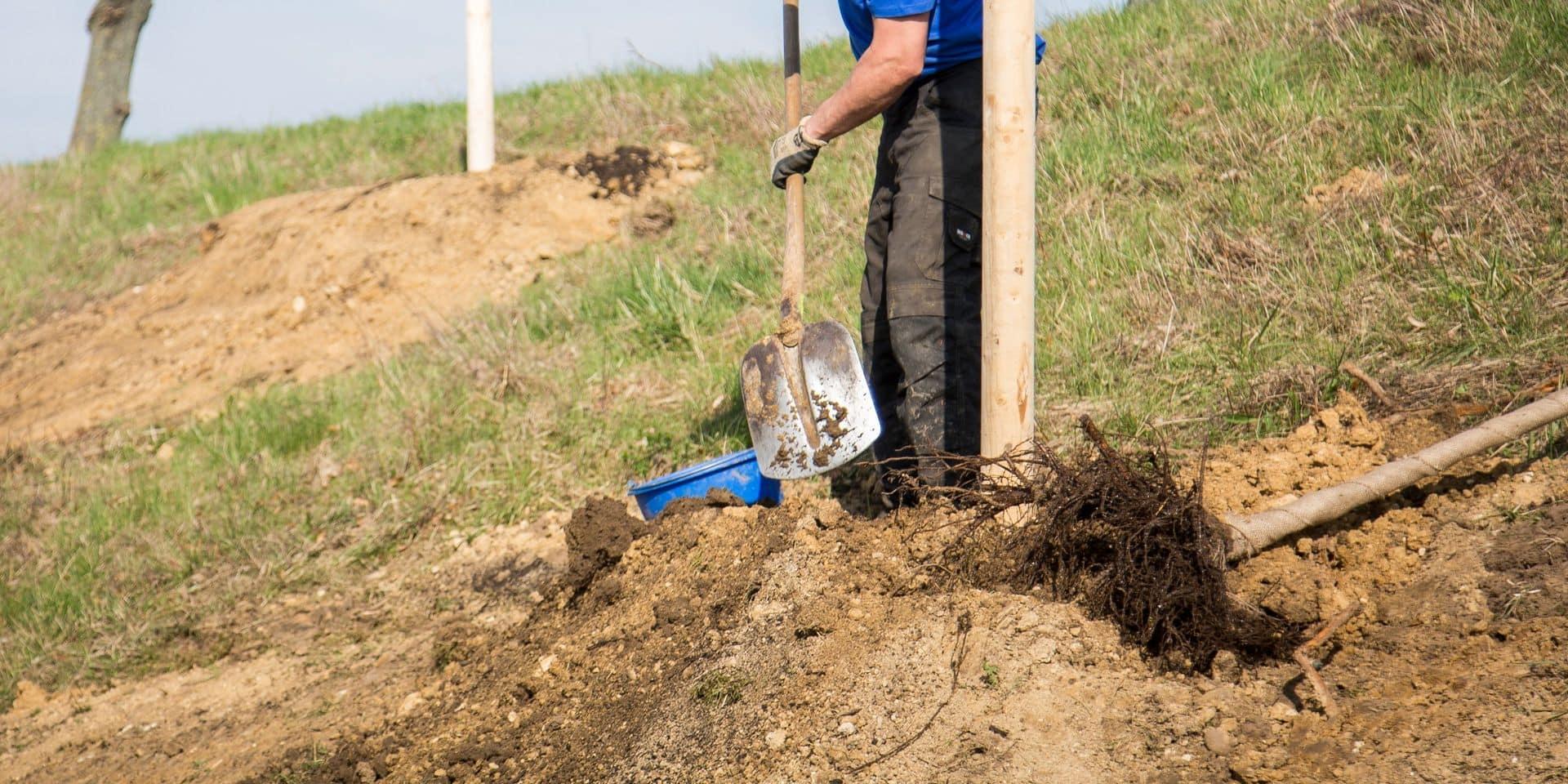 Offrir un arbre aux familles d'un défunt pour célébrer la vie après le confinement: la belle idée d'un échevin waterlootois