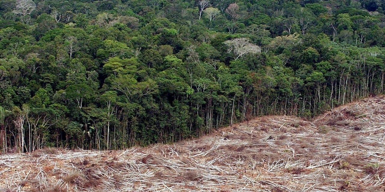 """""""En deux ans de mandat de Bolsonaro, nous avons eu les deux pires années pour la déforestation"""""""