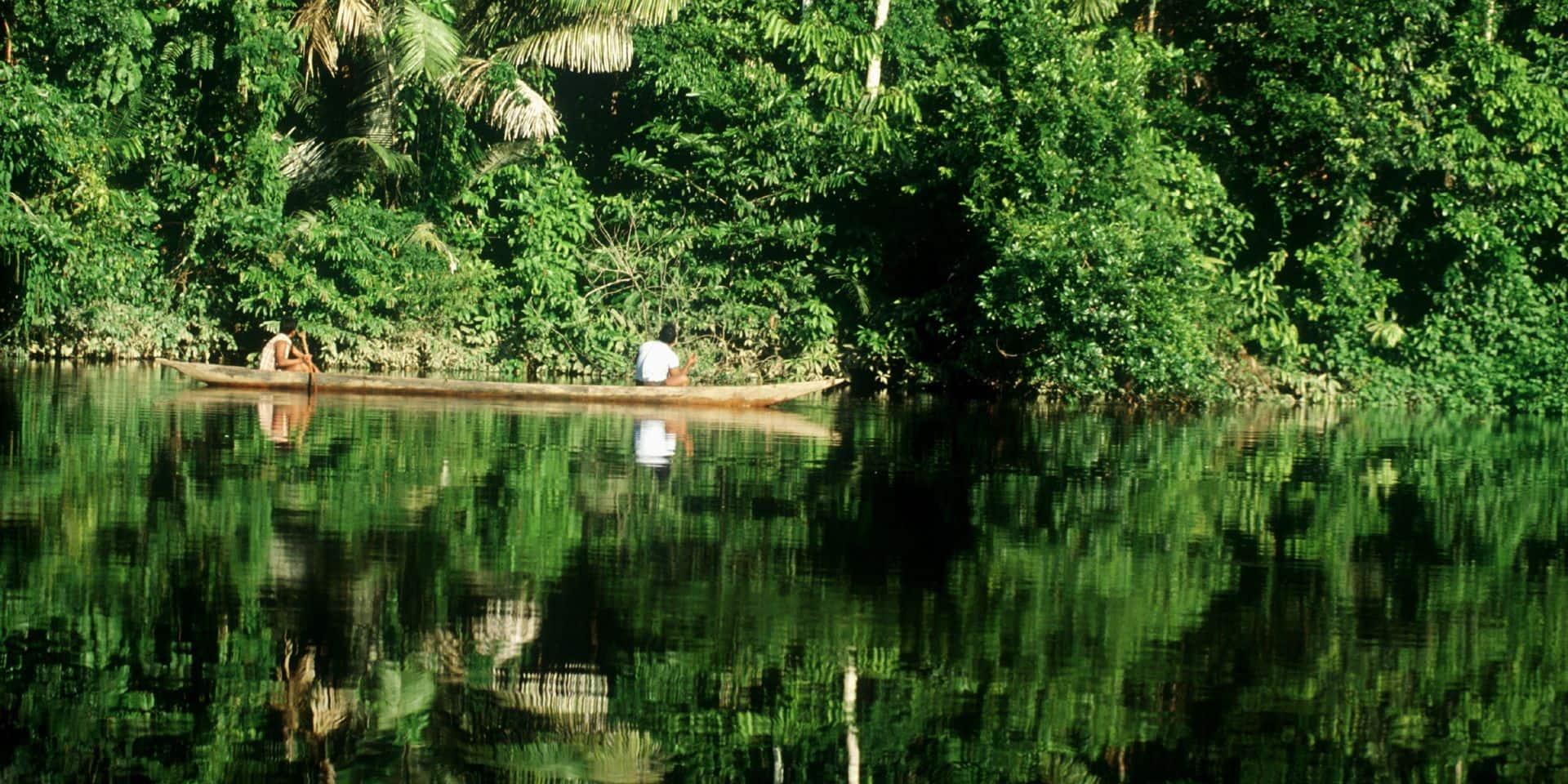 Changement climatique: la forêt amazonienne pourrait disparaître en 50 ans