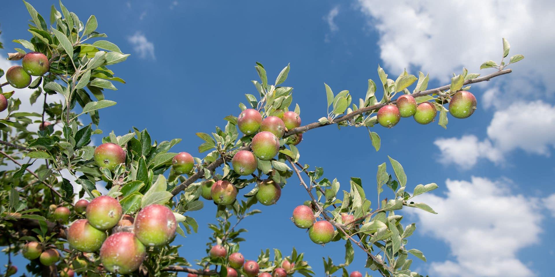 Petit manuel de premiers secours pour les arbres fruitiers