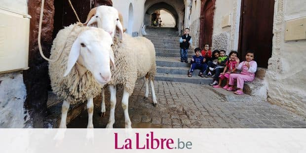 Children sit near sheep bought for a sacrifice on the occasion of the Eid al-Adha festival, in Algiers, on November 2, 2011. AFP PHOTO / AFP PHOTO / FAROUK BATICHE