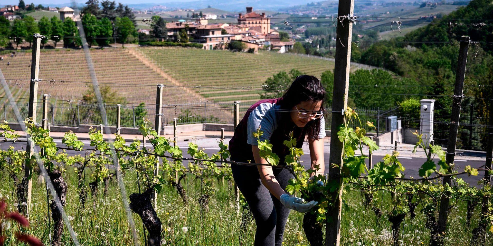 """En Italie, des migrants régularisés """"sous conditions"""" pour sauver les récoltes"""