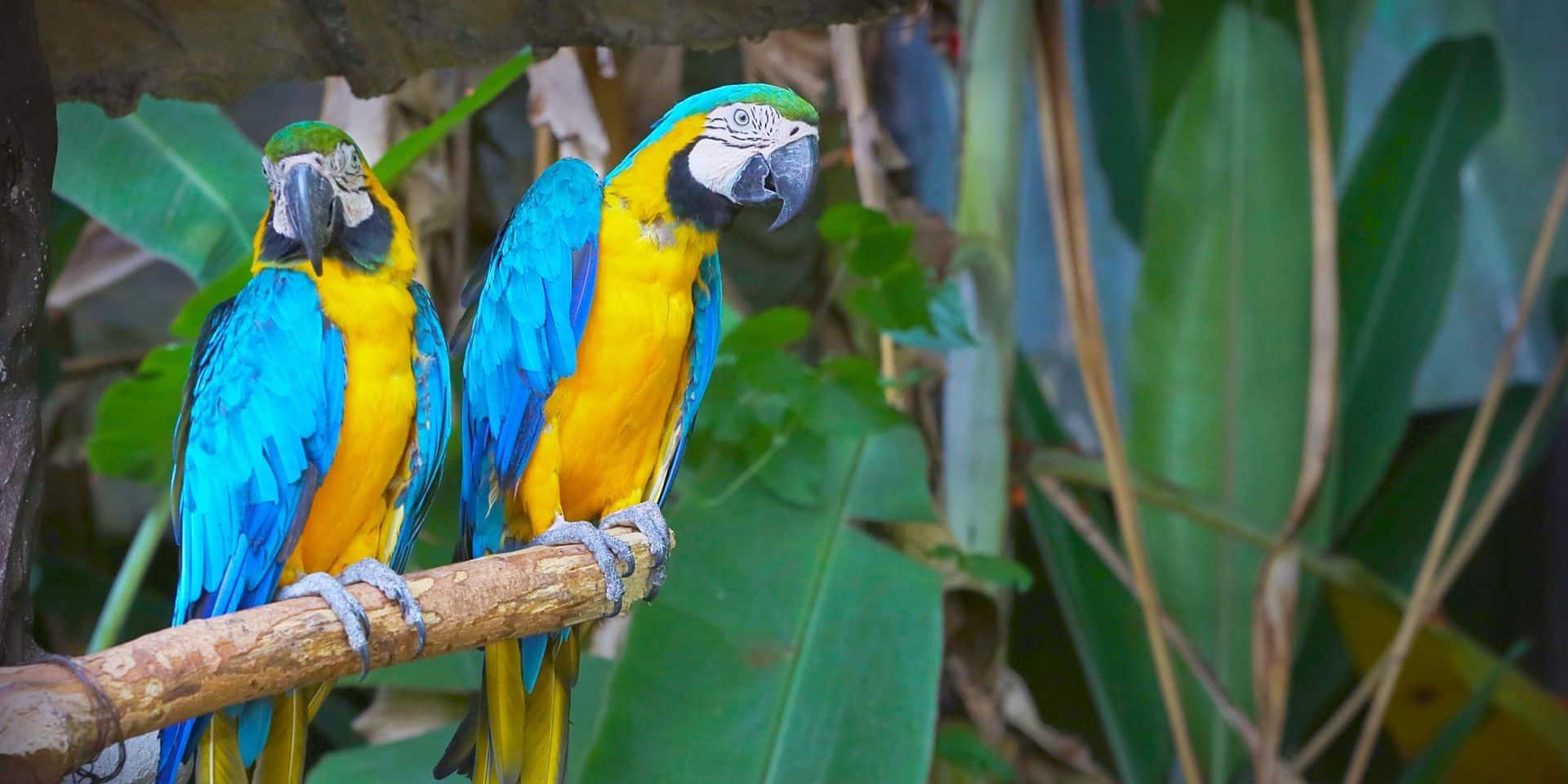 Un trafic illégal d'espèces rares d'oiseaux et reptiles en Belgique ?