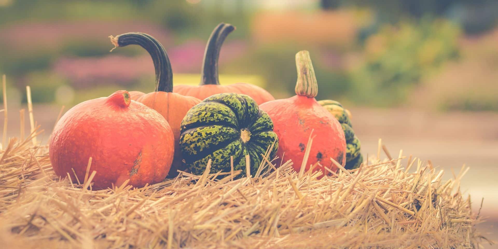 Halloween: gare à l'intoxication aux courges amères, voici les techniques pour les repérer