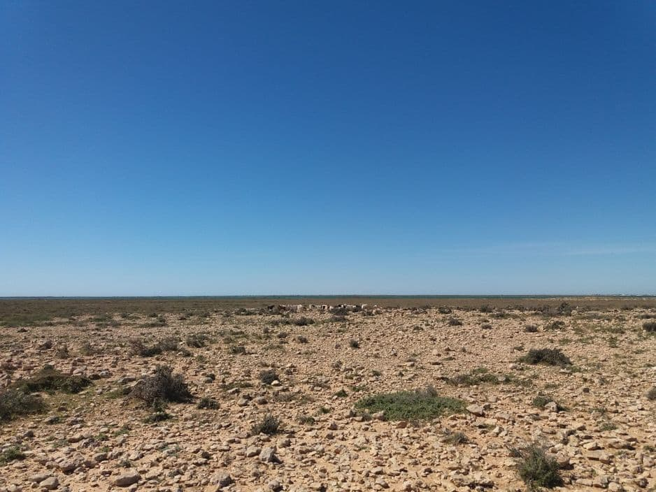 Certains vont conduire leurs moutons sur les îles où l'activité humaine est nulle, et où les bêtes peuvent bénéficier d'une verdure plus importante que sur les îles habitées de Gharbi et Chergui.