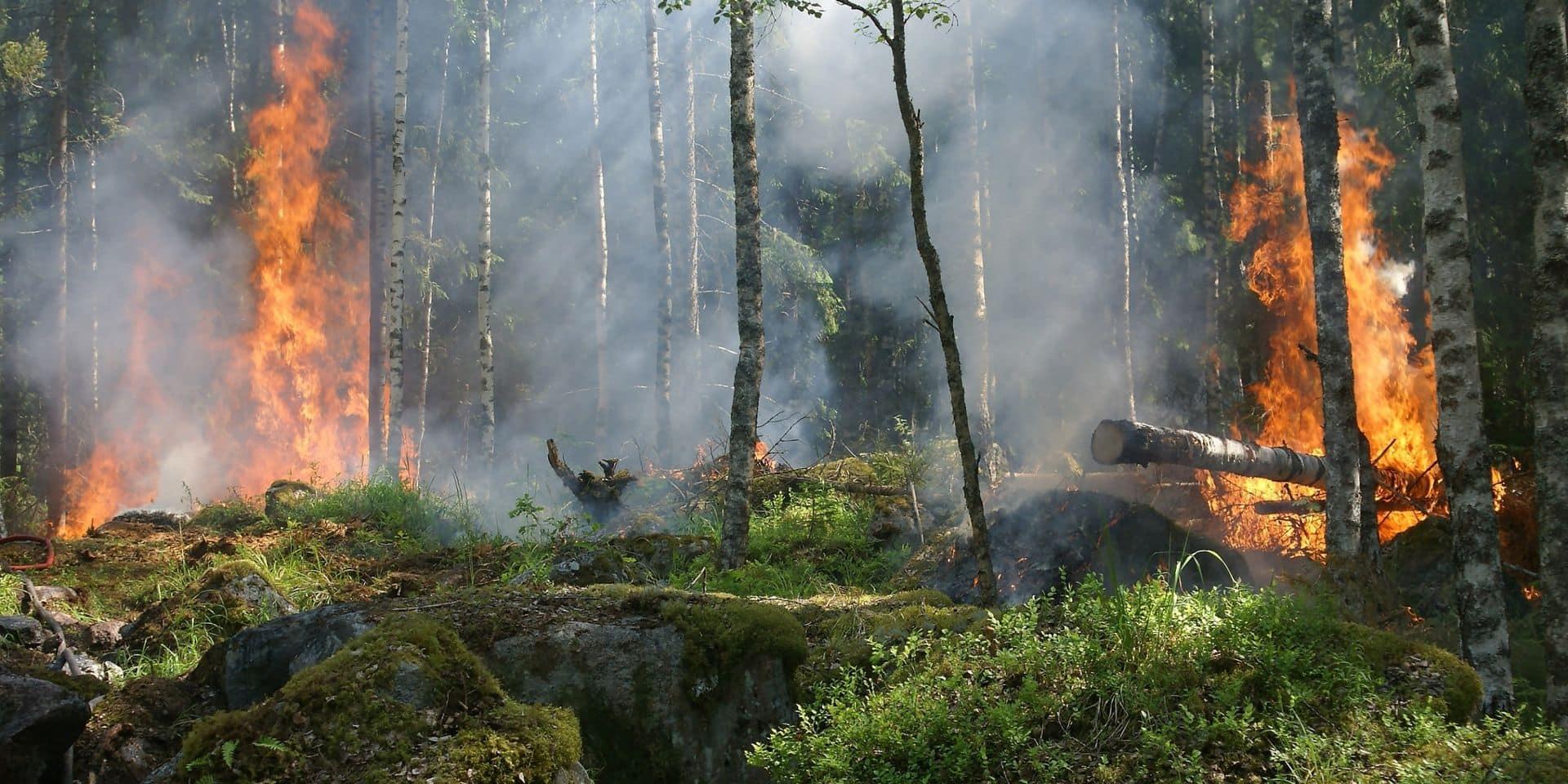 Les feux de forêt dans le monde ont émis plus de CO2 que les Etats-Unis dans leur ensemble