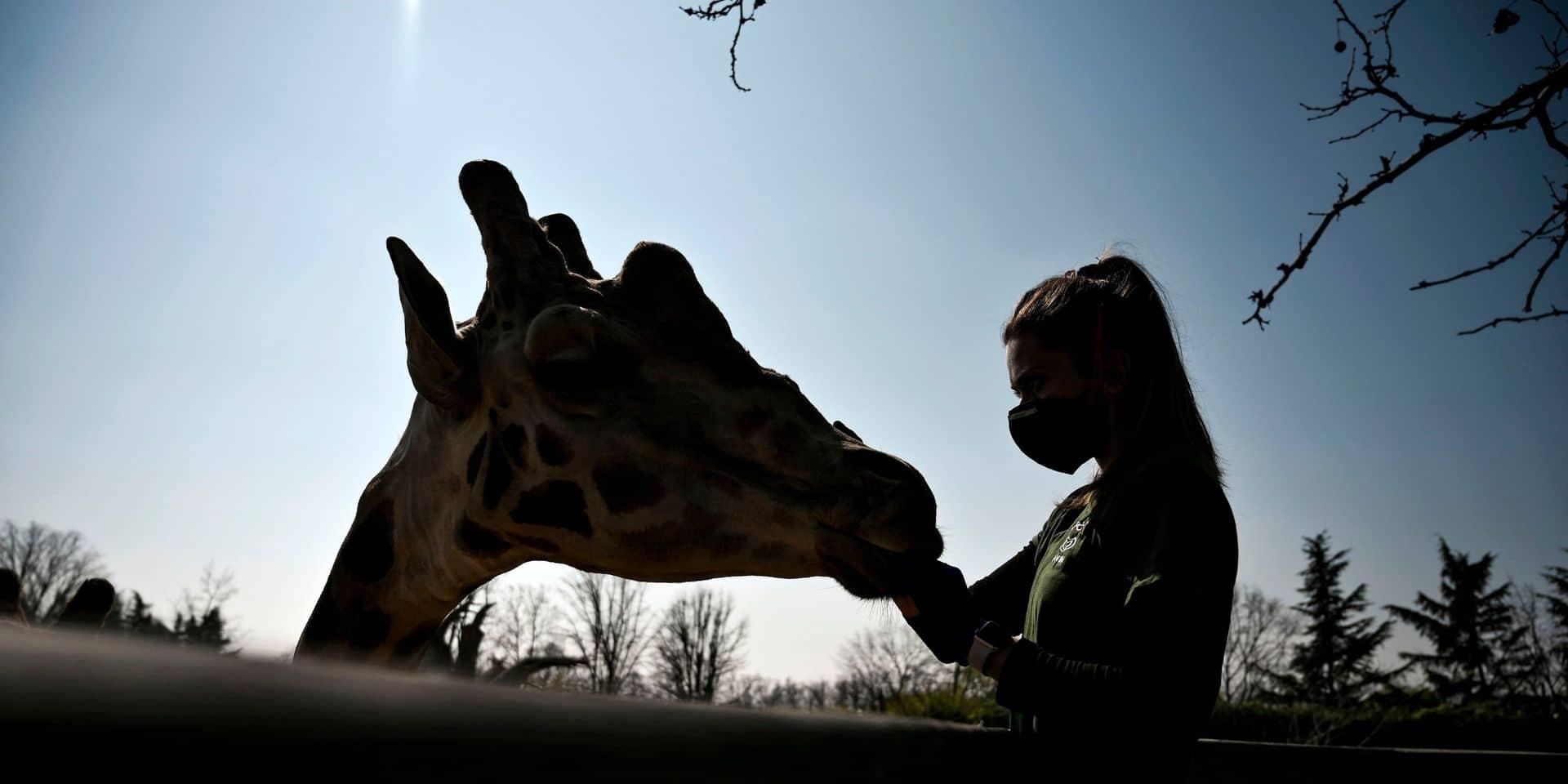 Déserté à cause du virus, un zoo italien lance un SOS