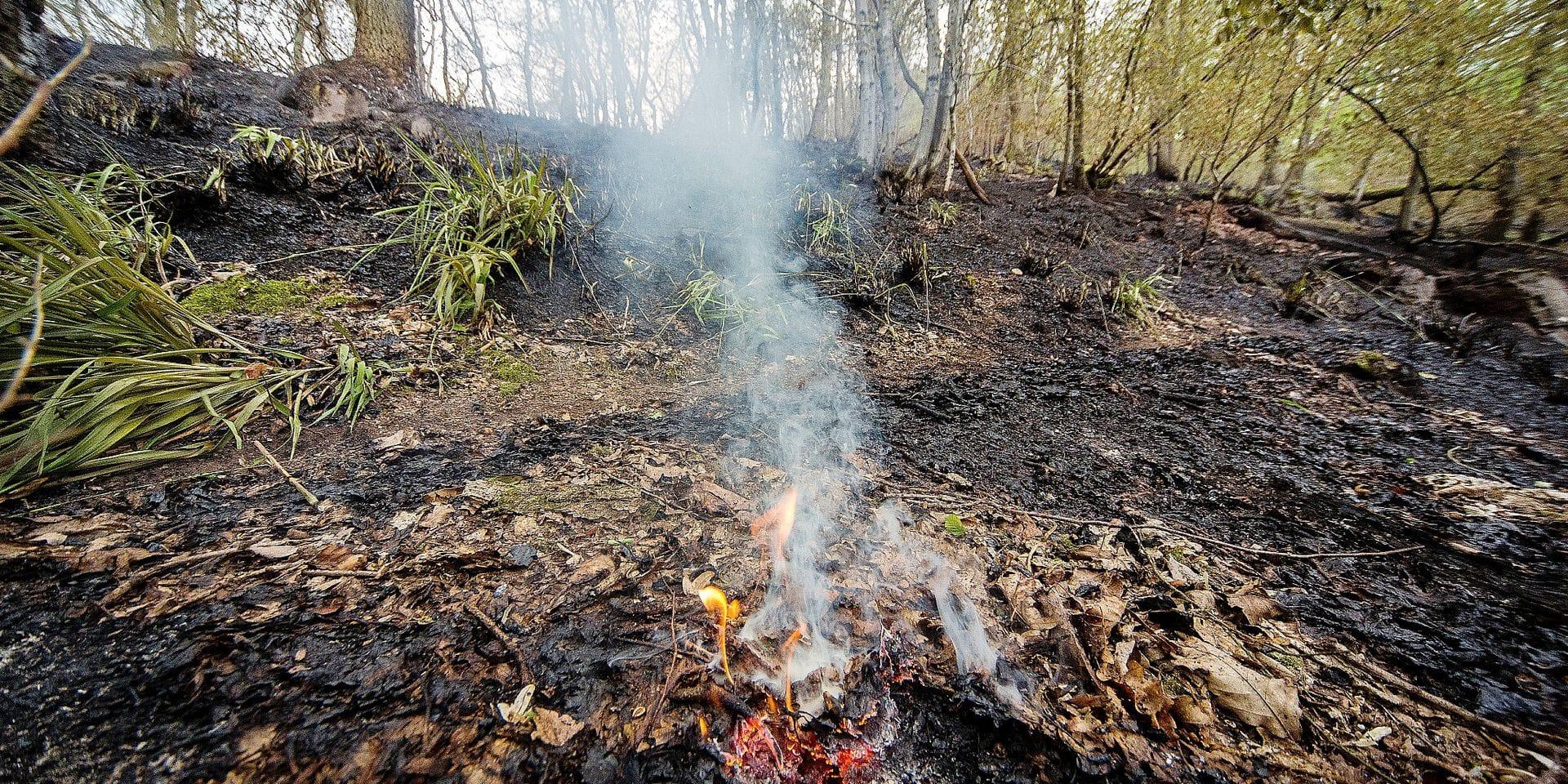 Angleur : les dégâts dans le bois de Colonster après le feu de forêt du 30 avril