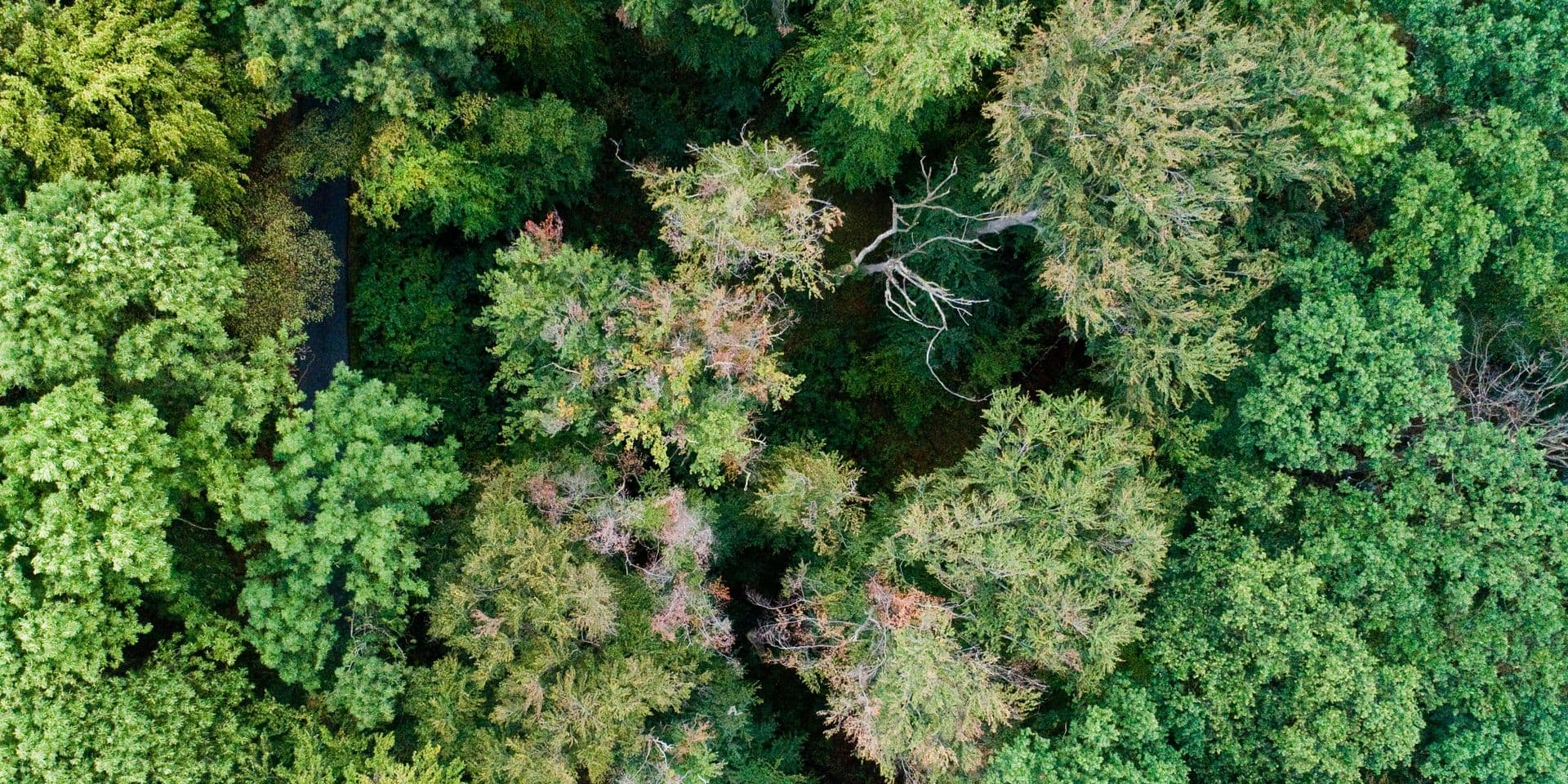 Comment les arbres communiquent discrètement entre eux