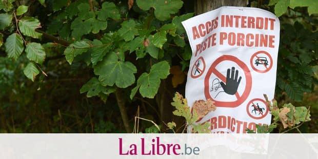 Pour se protéger, la France installe des clôtures — Peste porcine