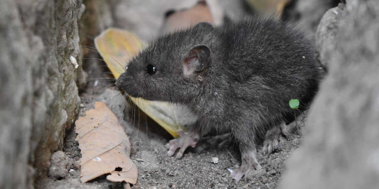 Maladies émergentes d'origine animale : d'où viendra la prochaine menace ?