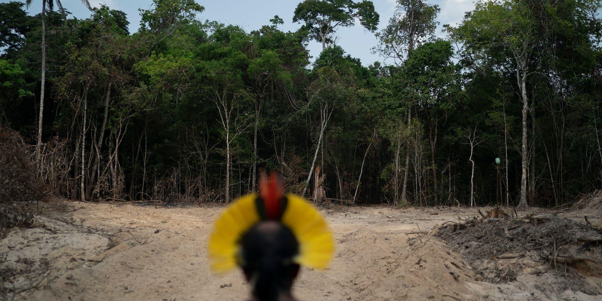 La déforestation explose à nouveau en Amazonie
