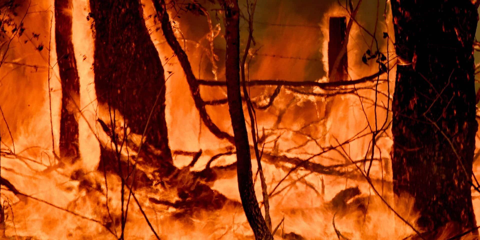 """""""Incendies incroyablement dangereux"""": l'Australie placée en état d'urgence, le rallye annulé"""