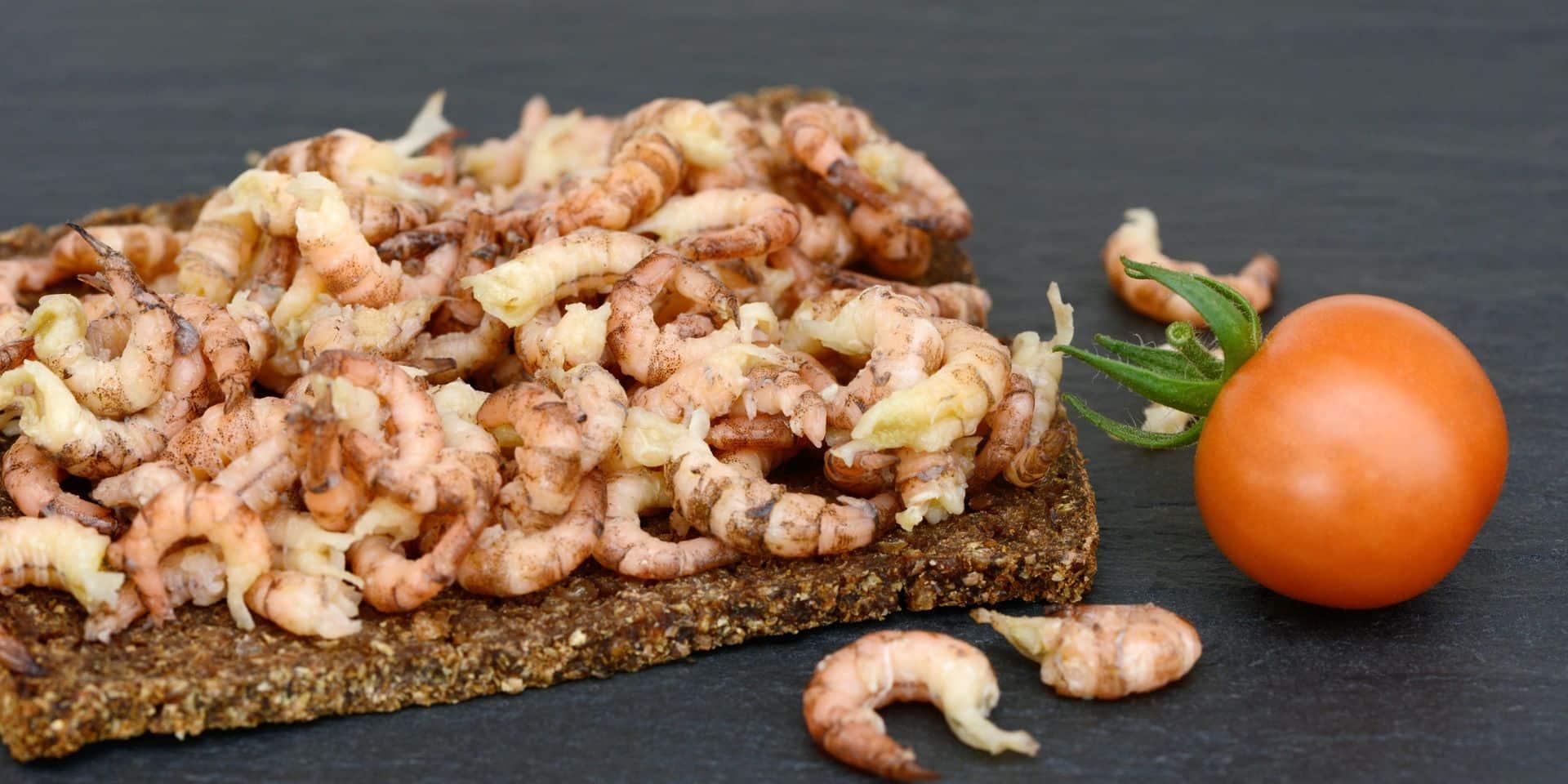 Le prix des crevettes grises va-t-il baisser pour les fêtes de fin d'année ?
