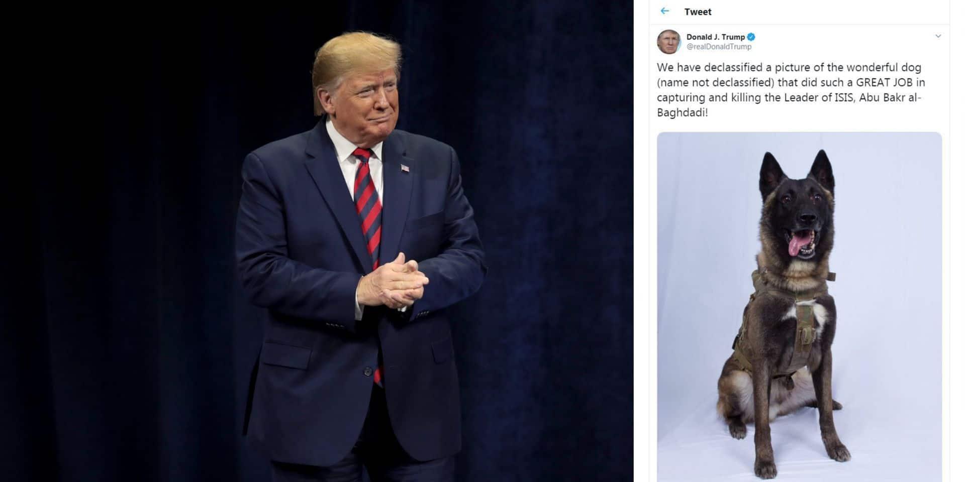 """Donald Trump dévoile la photo du chien """"héros"""" et blessé dans l'assaut contre Abou Bakr al-Baghdadi"""