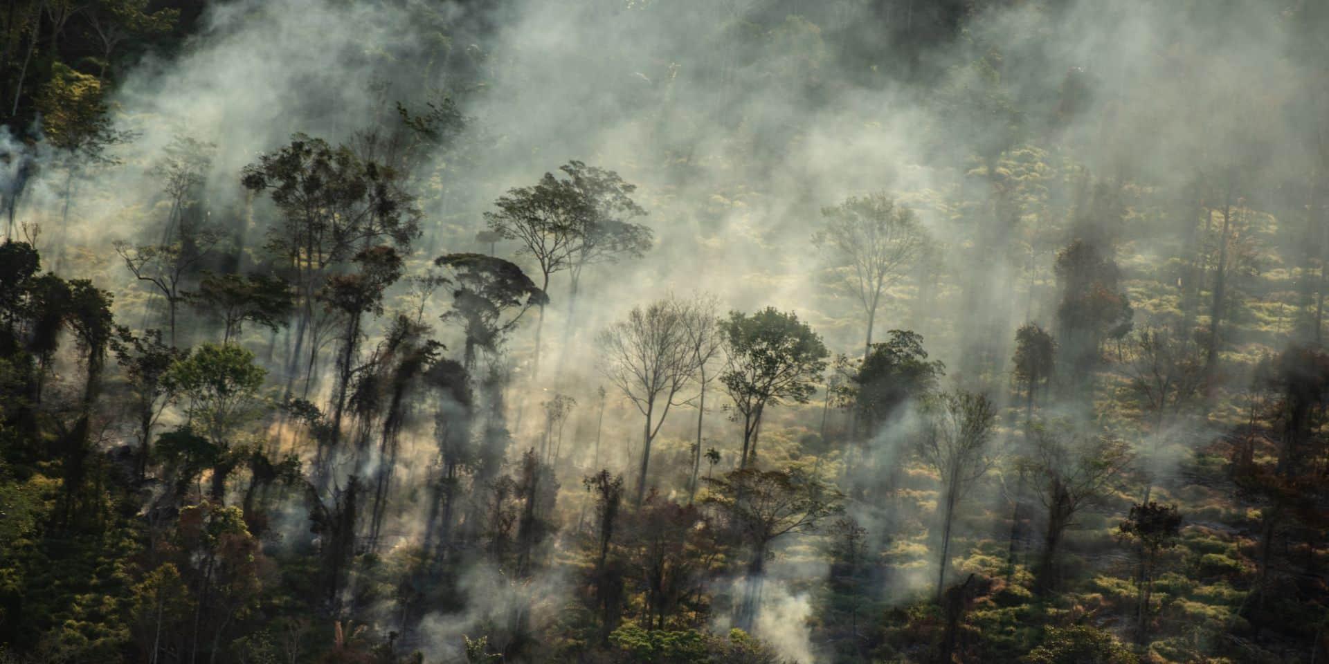 Au Brésil, 94% de la déforestation en Amazonie est illégale, selon un rapport